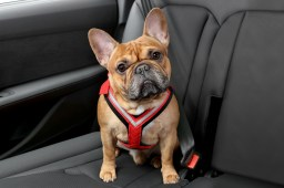 allsafe-comfort-dog-car-harness-5-lg